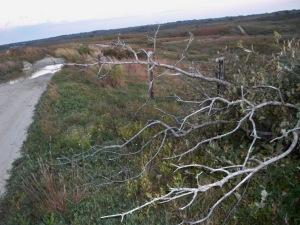 Nantucket 2010 030